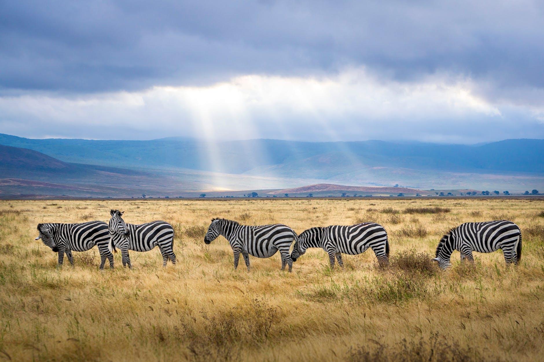 Oplev Afrikas vilde dyr
