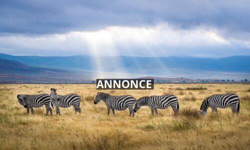 Gode råd til dig der skal på safari